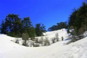 Tannourine Cedar Reserve Snowshoeing Trip with Blue Carrot Adventures and I-Hike