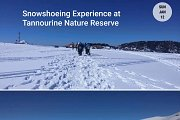 Snowshoeing Experience at Tannourine Cedars Reserve
